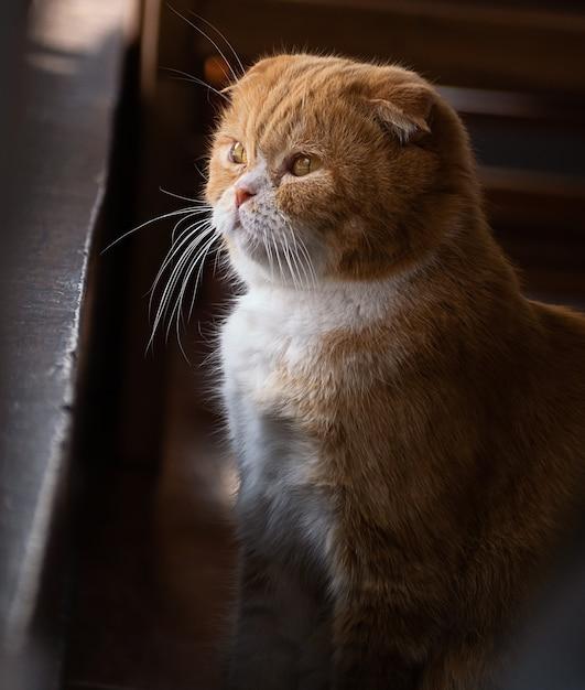 Nette einsame katze sitzen und draußen schauen, Premium Fotos