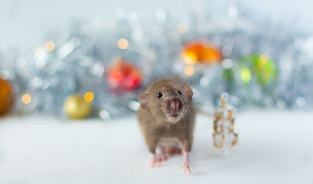 Nette graue kleine ratte, die im rahmen schaut und nahe bei weihnachtsbaum mit schöner leuchtender grauer unschärfe und weihnachtsbällen sitzt Premium Fotos