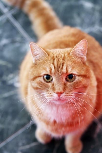 Nette katze auf dem boden Kostenlose Fotos