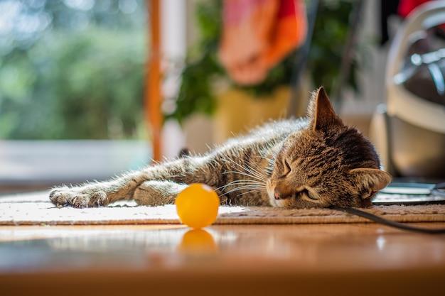 Nette katze, die zu hause auf dem boden liegt Kostenlose Fotos
