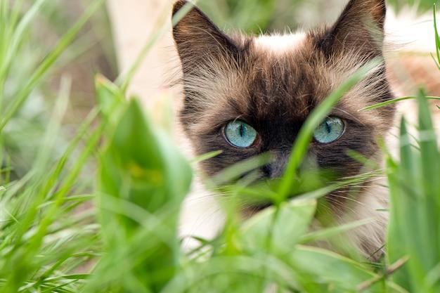 Nette katze mit blauen augen im garten Kostenlose Fotos