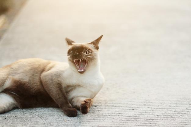 Nette siamesische katze genießen und schlafen auf konkretem boden Premium Fotos