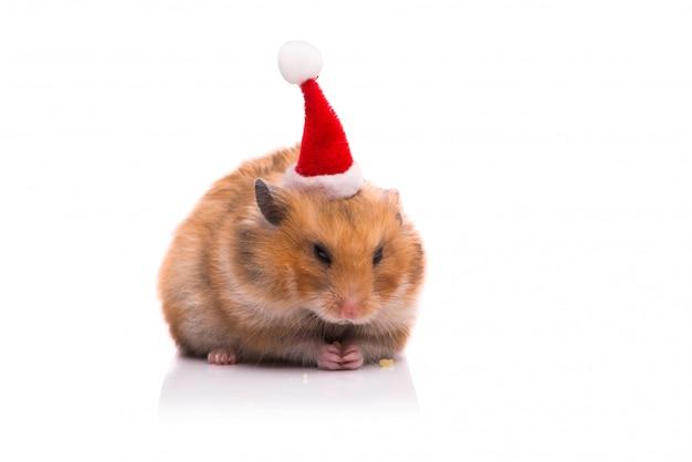 Netter hamster mit dem sankt-hut getrennt Premium Fotos