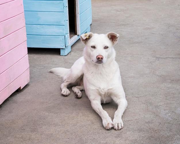 Netter hund, der darauf wartet, von jemandem adoptiert zu werden Kostenlose Fotos