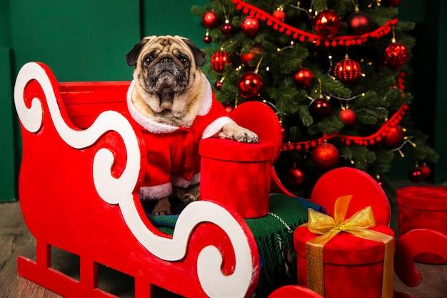 Netter hund, der weihnachtsmann-platz im sleight nimmt Kostenlose Fotos