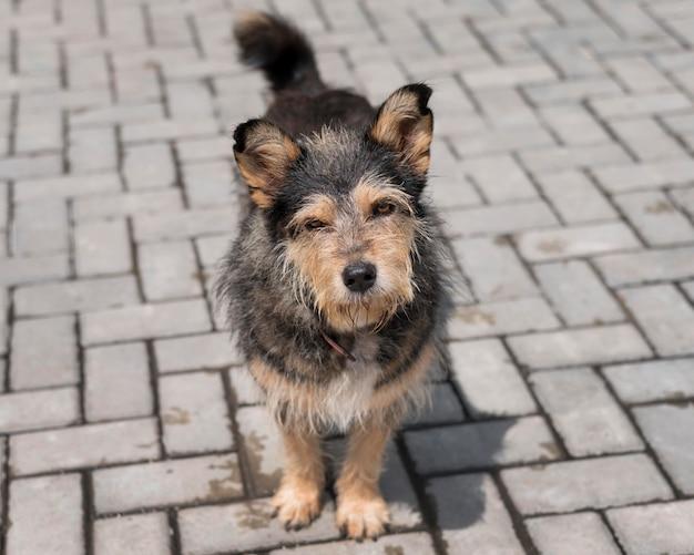 Netter hund draußen im tierheim, der darauf wartet, von jemandem adoptiert zu werden Kostenlose Fotos