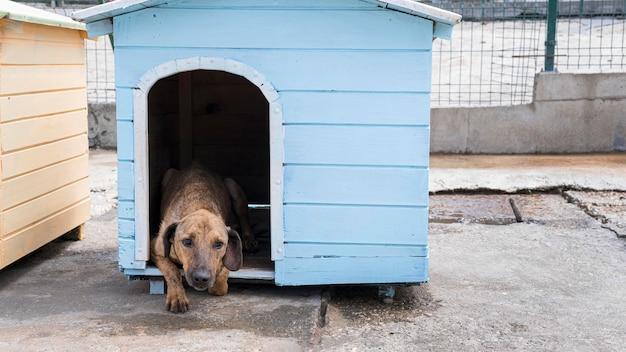 Netter hund im haus, der darauf wartet, von jemandem adoptiert zu werden Kostenlose Fotos