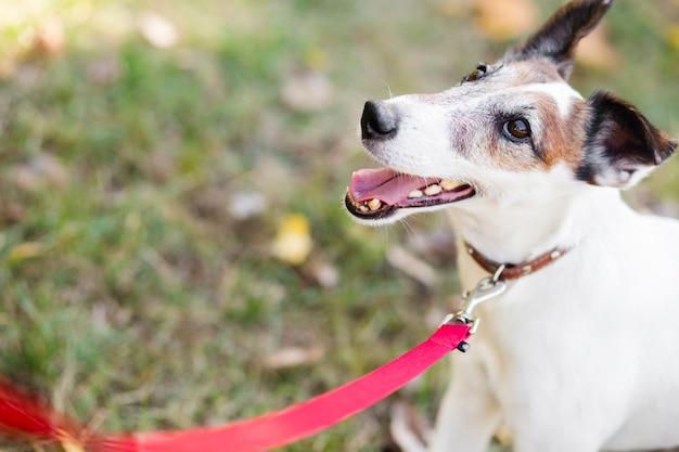 Netter hund im park mit leine Kostenlose Fotos