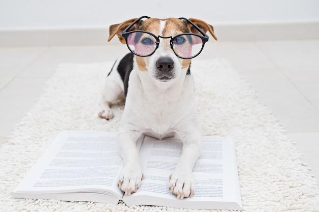 Netter hund in den brillen mit buch Premium Fotos