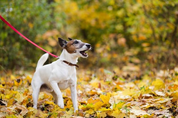 Netter hund mit der leine, die im forrest steht Kostenlose Fotos