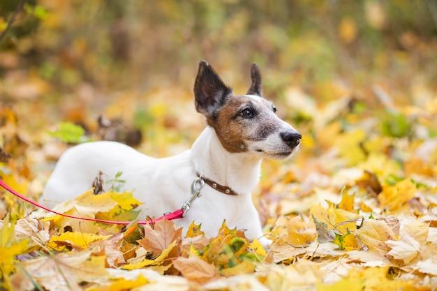 Netter hund mit der leine, die in forrest legt Kostenlose Fotos