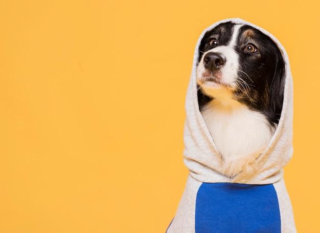 Netter hund mit einem kostüm Kostenlose Fotos
