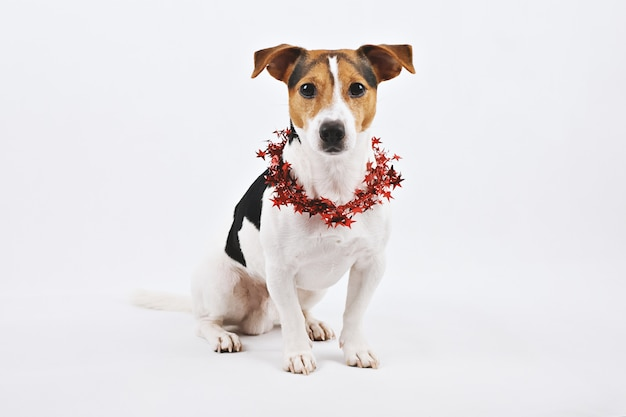 Netter hundewelpe mit rotem sankt-hut Premium Fotos