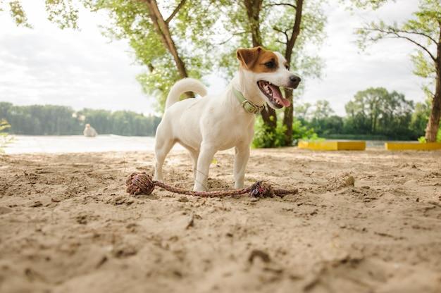 Netter kleiner hund, der auf dem seeufer steht Premium Fotos