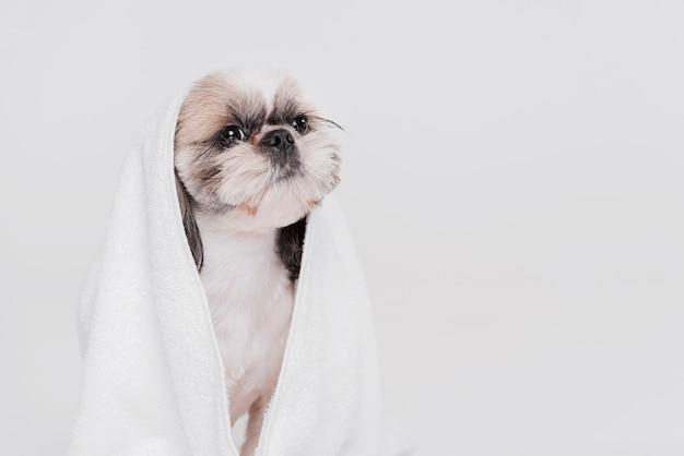 Netter kleiner hund, der in einem tuch sitzt Kostenlose Fotos