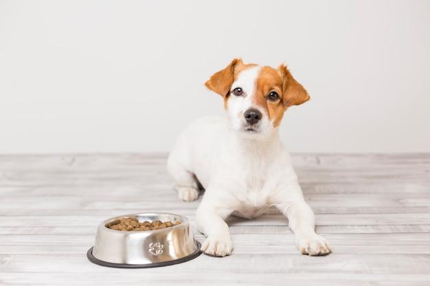 Netter kleiner hund, der sitzt und wartet, um seine schüssel hundefutter zu essen Premium Fotos