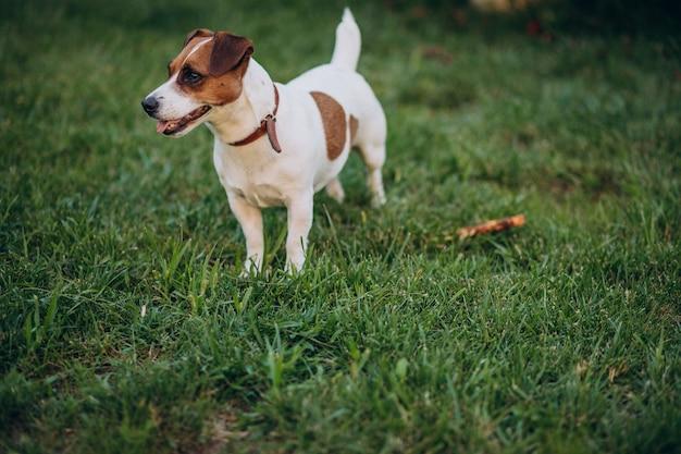 Netter kleiner hund im hinterhof Kostenlose Fotos