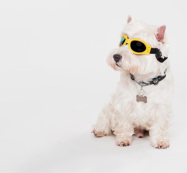 Netter kleiner hund mit brille Kostenlose Fotos