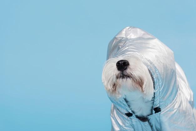 Netter kleiner hund mit kostüm Kostenlose Fotos