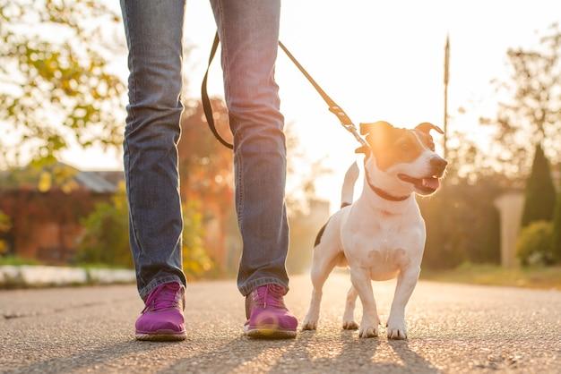 Netter kleiner hund mit seinem inhaber draußen Kostenlose Fotos