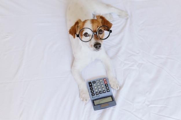 Netter kleiner hundebuchhalter, der mit taschenrechner auf bett denkt und berechnet Premium Fotos