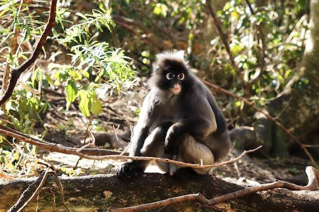 Netter kleiner makaken, der auf einem holzblock sitzt Kostenlose Fotos