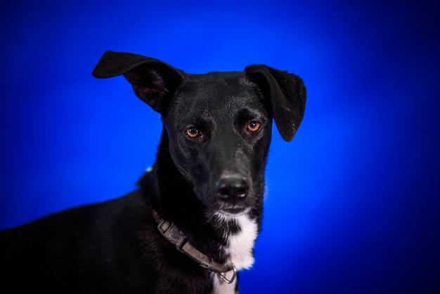Netter mischlingshund. porträt. Premium Fotos