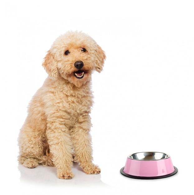Netter pudelhund lokalisiert auf weiß Premium Fotos