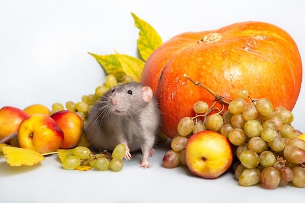 Netter ratten-dumbo mit obst und gemüse. trauben, kürbis, nektarinen. ratte - ein symbol für das chinesische neujahr Premium Fotos