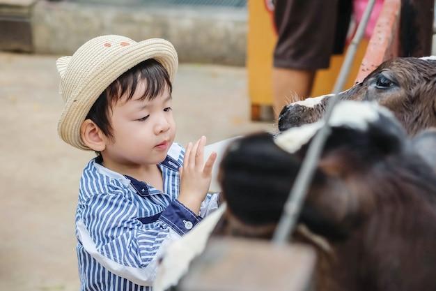 Nettes asiatisches kind der nahaufnahme, das kalb durch flasche milch im bauernhofhintergrund melkt Premium Fotos