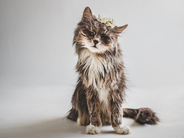 Nettes, charmantes kätzchen auf einem weißen hintergrund Premium Fotos