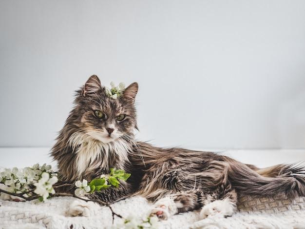 Nettes, charmantes kätzchen auf einem weißen Premium Fotos