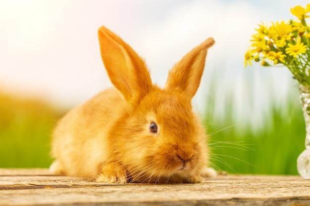 Nettes flaumiges rotes kaninchen auf naturhintergrundblumenstrauß von gelben blumen Premium Fotos