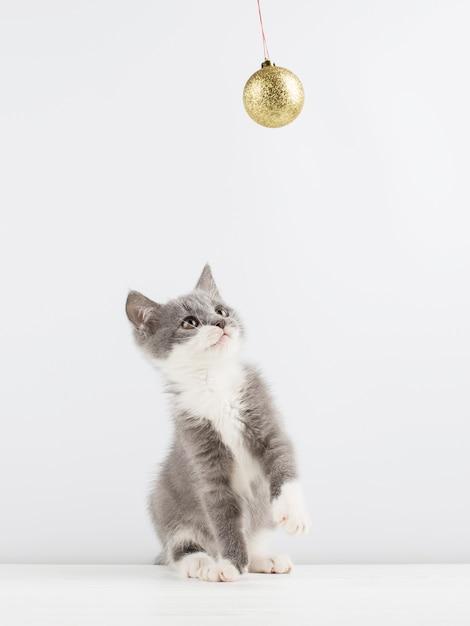 Nettes graues kätzchen, das mit einem weihnachtsspielzeug spielt. Premium Fotos