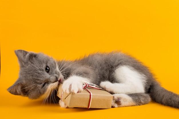 Nettes graues kätzchenspielen lustig und spaß mit einer weihnachtsgeschenkbox auf einem gelb. Premium Fotos