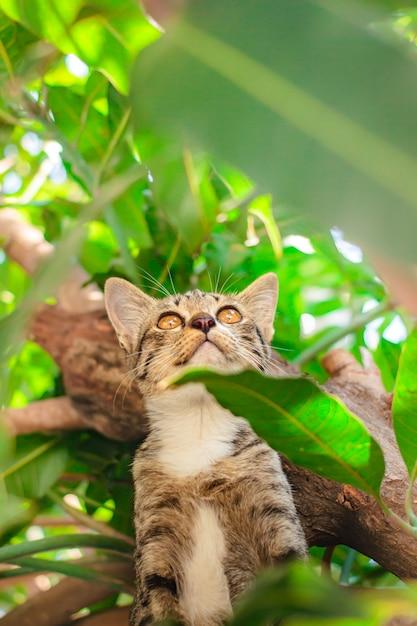 Nettes kätzchen der getigerten katze, das auf baum sich entspannt. Premium Fotos