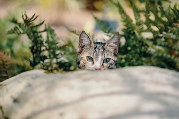 Nettes kätzchen mit schönen augen hinter einem stein zwischen den pflanzen Kostenlose Fotos