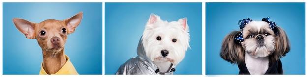 Nettes kleines hundeporträt Kostenlose Fotos