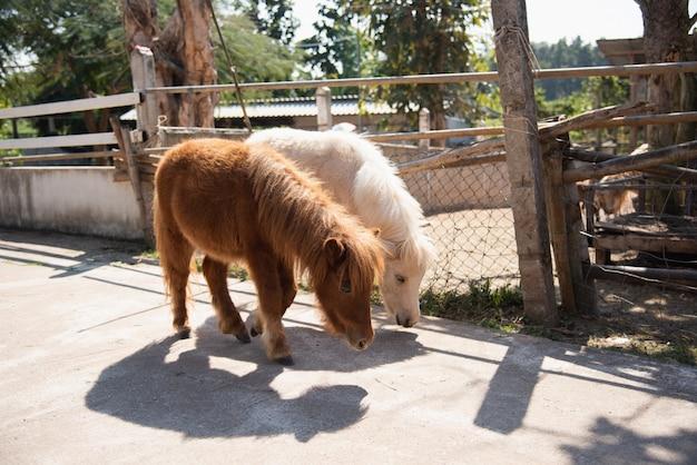 Nettes pony im zoo Premium Fotos