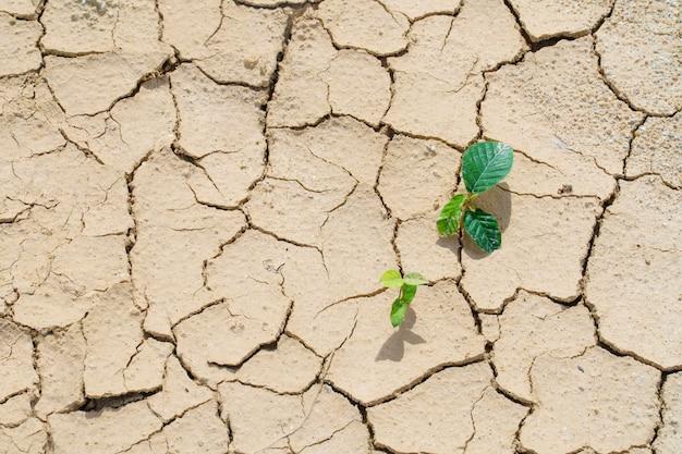 Neue pflanzen keimen aus dem rissschmutz des überlebens Premium Fotos