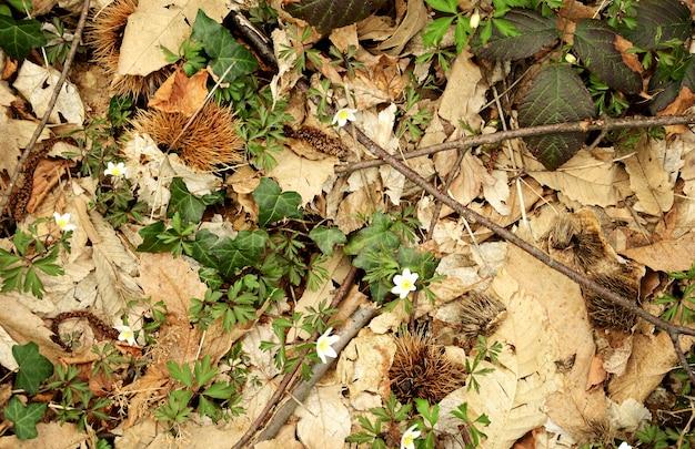 Neue pflanzen vor dem hintergrund von laub im wald Premium Fotos