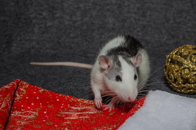 Neues jahr-konzept. niedliche weiße ratte in einem dekor des neuen jahres. symbol des jahres ist eine ratte. Premium Fotos