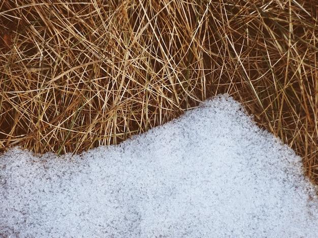 Neuschnee schmilzt auf trockenem gras Premium Fotos