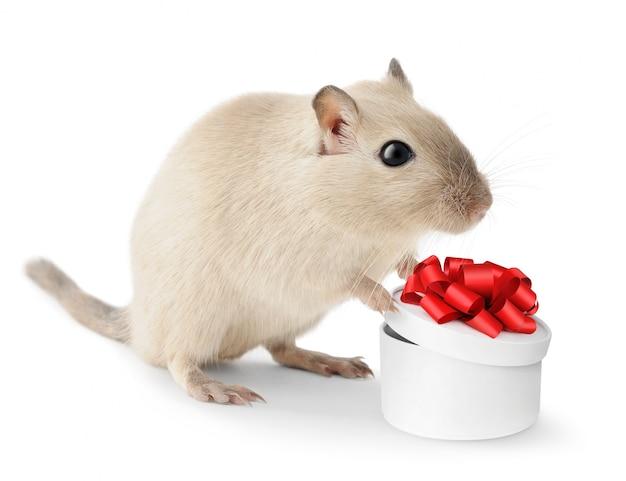 Niedliche gerbilhaustiermaus mit einer geschenkbox in seinen tatzen Premium Fotos