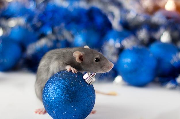 Niedliche graue kleine ratte, die im rahmen schaut und blauen weihnachtsball mit schöner blau- und silberunschärfe umarmt Premium Fotos