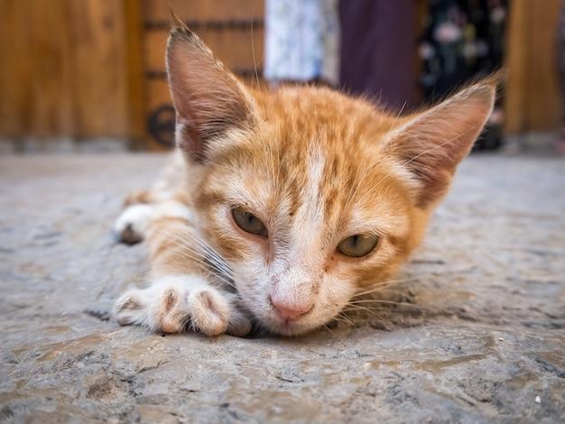 Niedliche heimische orange katze, die auf dem boden liegt Kostenlose Fotos