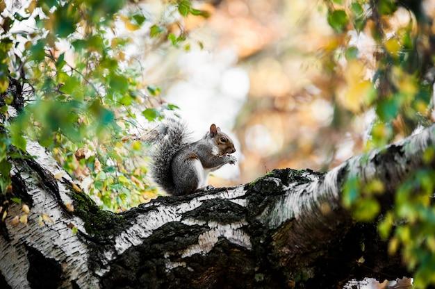 Niedliches eichhörnchen, das auf dem moosigen baumstamm mit unscharfem hintergrund sitzt Kostenlose Fotos