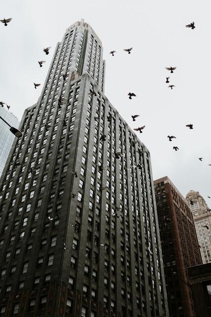 Niedrig abgewinkelter schuss eines wolkenkratzers in chicago mit tauben, die in der nähe fliegen Kostenlose Fotos