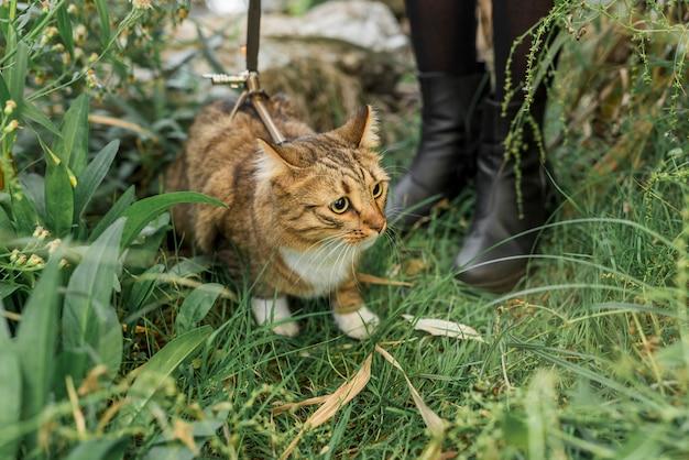 Niedriger abschnitt einer frau, die im grünen gras mit ihrer katze der getigerten katze steht Kostenlose Fotos