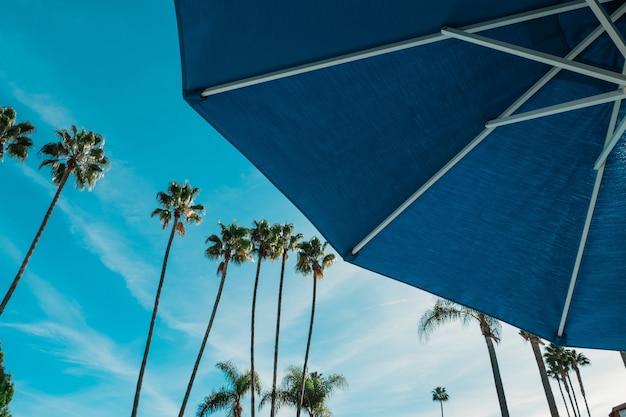 Niedriger winkel eines blauen regenschirms mit den hohen palmen Kostenlose Fotos